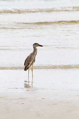 Tide Photograph - Night Heron 2 By Darrell Hutto by J Darrell Hutto