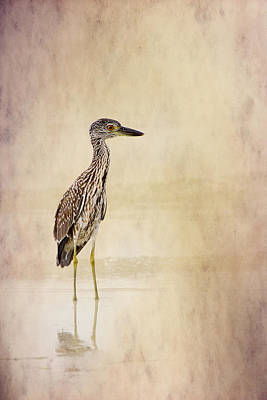 Juvenile Wall Decor Photograph - Night Heron 3 By Darrell Hutto by J Darrell Hutto