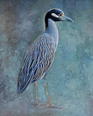 Photograph - Night Heron Blues by HH Photography of Florida