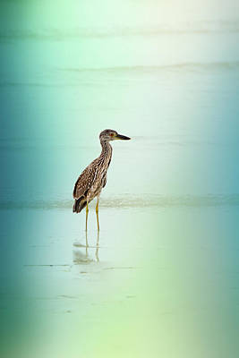 Juvenile Wall Decor Photograph - Night Heron By Darrell Hutto by J Darrell Hutto