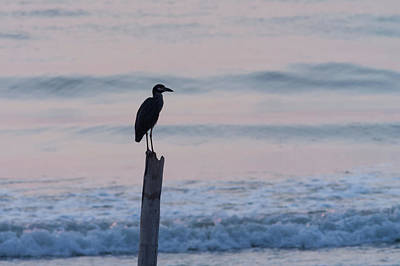Photograph - Night Heron Dawn Post by Paul Rebmann