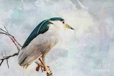 Photograph - Night Heron by Debbie Green