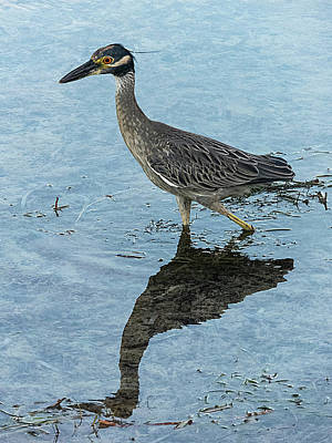 Photograph - Night Heron Reflection by Bob Slitzan