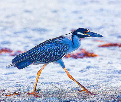 Photograph - Yellow-crowned Night Heron by Richard Goldman