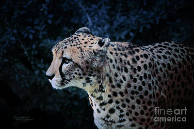 Photograph - Night Hunting by Inspirational Photo Creations Audrey Taylor