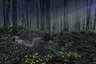Photograph - Night In The Forest by Alexey Stiop