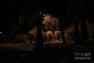 Photograph - Night In The Park  by Ana Mireles