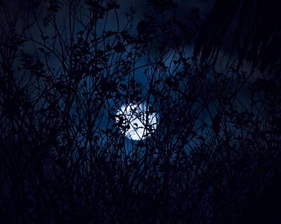 Beauty Mark Photograph - Night In The Witch's Forest by Mark Andrew Thomas
