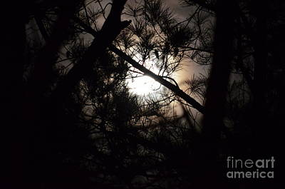 Photograph - Night Light by Maria Urso