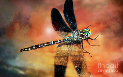 Photograph - Night Light Of The Dragonfly by Janie Johnson