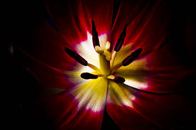 Night Lily Two Art Print by John Ater