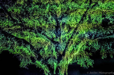 Night Moss Art Print