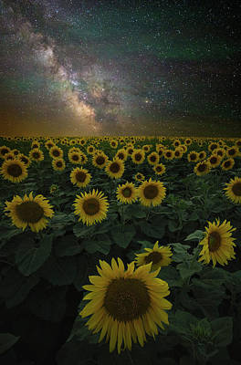 Sunflowers Royalty-Free and Rights-Managed Images - Night of a Billion Suns by Aaron J Groen
