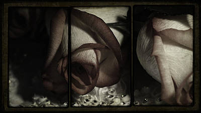 Of Roses And Love Wall Art - Photograph - Night Of Love And Roses by Georgiana Romanovna