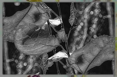 Photograph - Night Of Moonlight Garden.... by Paul Vitko