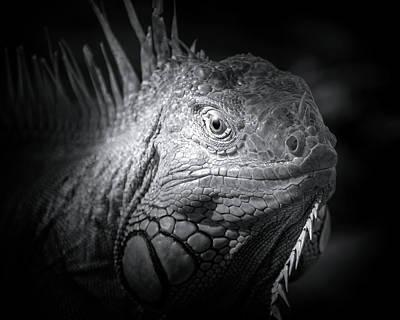 Photograph - Night Of The Iguana by Mark Andrew Thomas