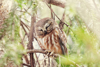Whet Owl Photograph - Night Owl by Carrie Ann Grippo-Pike