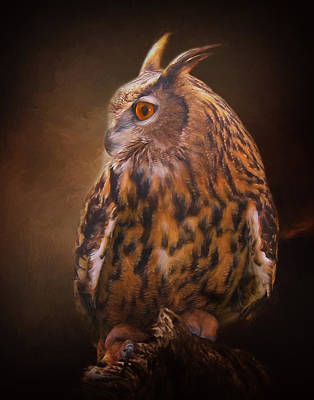 Photograph - Night Owl by David and Carol Kelly