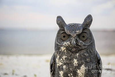 Photograph - Night Owl by Edward Fielding