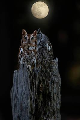 By Jackie Photograph - Night Owl by Jackie Sajewski