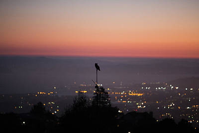 Photograph - Night Owl Over San Francisco by Digiblocks Photography
