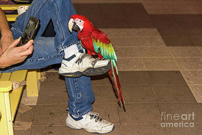 Photograph - Night-owl Red Macaw Parrot by Les Palenik