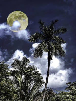 Photograph - Night Palms by Ken Frischkorn