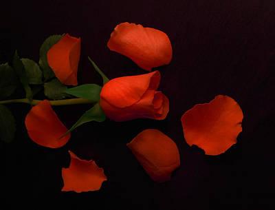 Photograph - Night Rose 2 by Johanna Hurmerinta