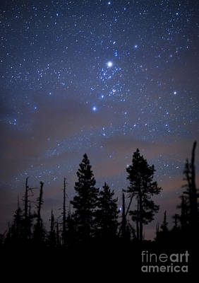 Photograph - Night Sky And Trees by Ben Canales