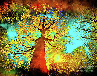 Digital Art - Night Sky Autumn by Gina Signore