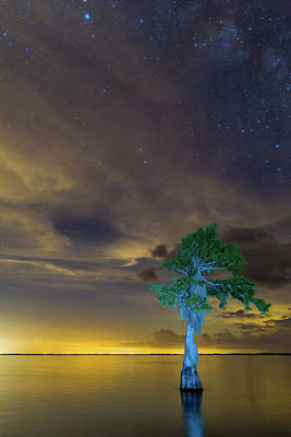 Photograph - Night Sky Over Blue Cypress Lake by Stefan Mazzola