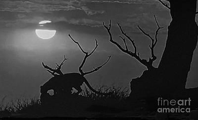 Photograph - Night Stalker by Steven Parker