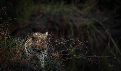 Photograph - Night Stalker by Tim Bryan
