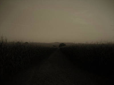 Photograph - Night Thoughts by Martina Rall