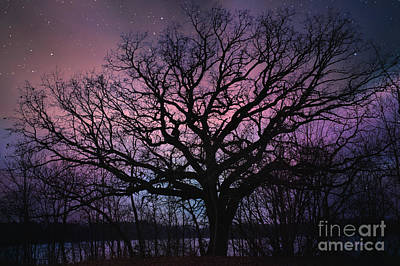 Photograph - Night Time At Brushy Creek State Park by Kathy M Kraus