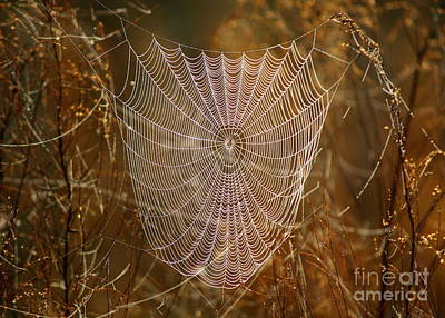 Photograph - Night Weaver by Carol Groenen