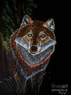 Animals Drawings - Night Wolf by Nick Gustafson