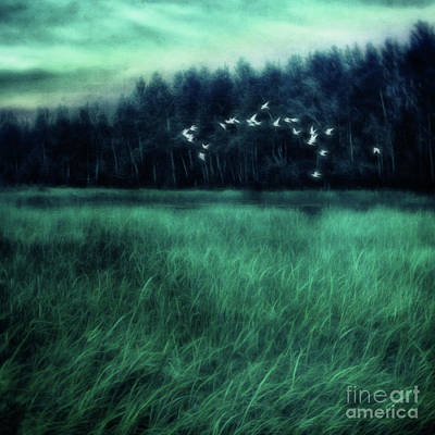 Phantasie Photograph - Nightbirds by Priska Wettstein