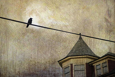 Photograph - Nightfall And A Crow by Theresa Tahara