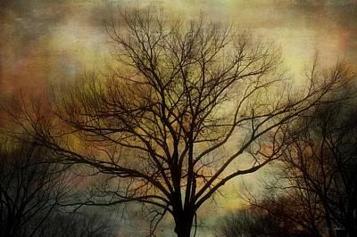 Nightfall Art Print by Barbara Chichester