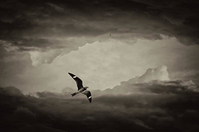 Photograph - Nighthawk Flight Through Time by Christina VanGinkel