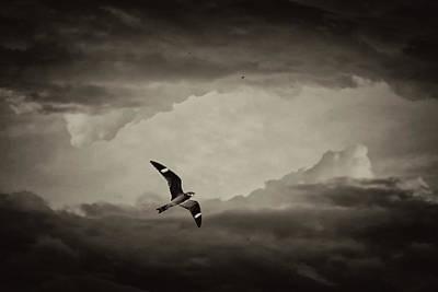 Photograph - Nighthawk Flight Through Time by Christina VanGinkel