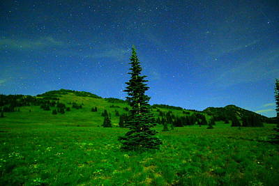 Nightly Stars And A Small Hemlock  Art Print by Jeff Swan