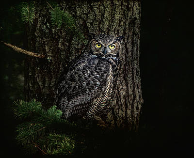 Photograph - Night Owl by Marilyn Wilson