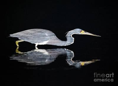 Photograph - Nightstalker 2 by Angela Murray