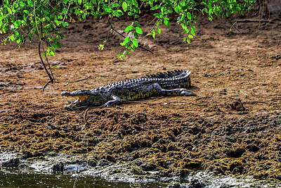 Photograph - Nile Crocodile by Marilyn Burton
