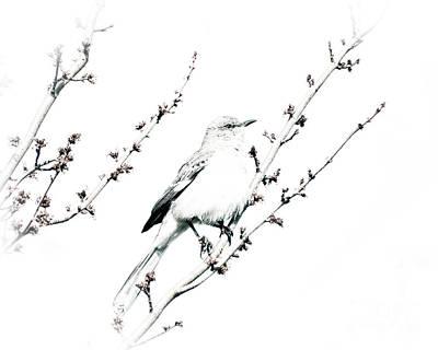 Mockingbird Photograph - Nimble Musicians Of The Air by Kerri Farley