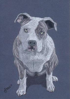 Pit Bull Drawing - Nina Bella by Stacey Jasmin