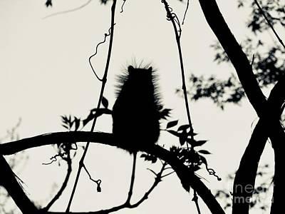 Photograph - Ninja Squirrel by Michael Krek