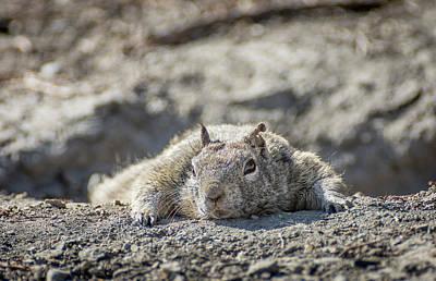 Photograph - Ninja Squirrel by Rick Mosher